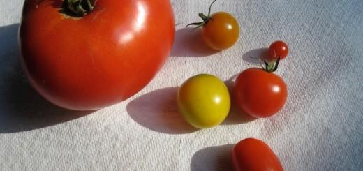 Two Tomato Soups
